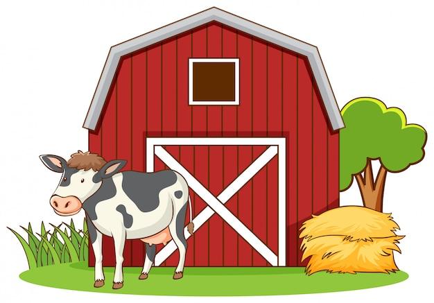 Śliczna krowy pozycja na farmyard