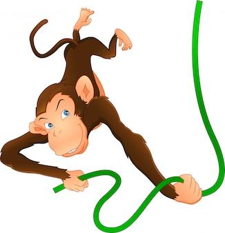 Śliczna małpa wisi