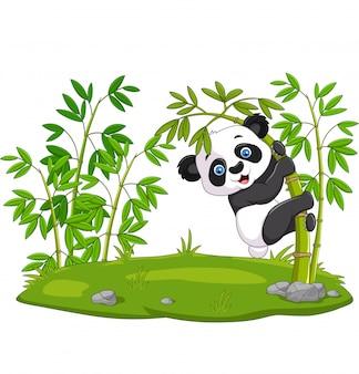 Śliczna śmieszna dziecko panda wiesza na bambusie