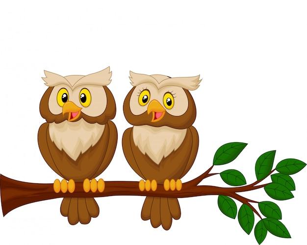 Śliczna sowy pary kreskówka