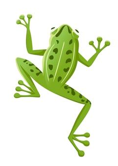 Śliczna uśmiechnięta zielona żaba siedzi na ziemi kreskówka projekt płaski wektor ilustracja