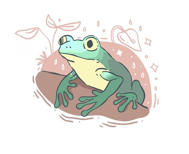 Śliczna żaba odizolowywająca na białym tle
