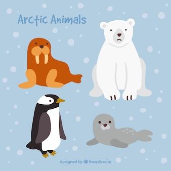 Śliczne arktyczne zwierzęta