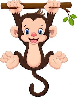 Śliczne dziecko małpy obwieszenie na drzewie