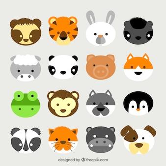 Śliczne głowy zwierząt