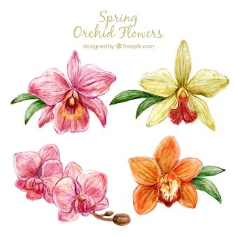 Śliczne kwiaty orchidei wzór