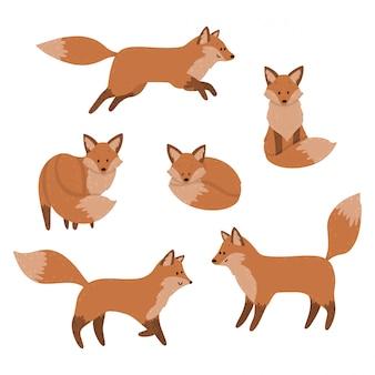 Śliczne lisy śpią, siedzą i skaczą. zestaw