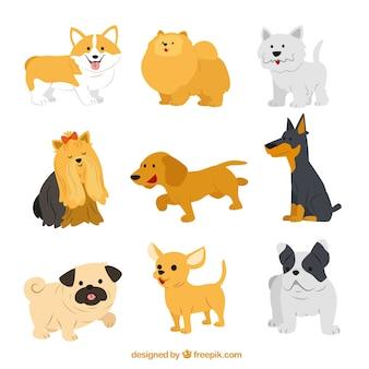 Śliczne ras psów