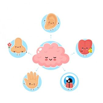 Śliczne szczęśliwe pięć ludzkich zmysłów otaczających mózg. wzrok, słuch, węch, dotyk, smak. płaska ilustracja. ludzki śliczny nos, oko, ręka, ucho, język wyczuwa plakatową koncepcję
