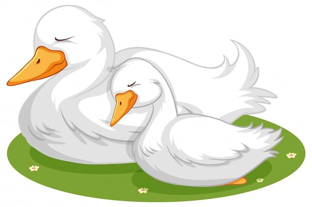 Śliczny kaczki dosypianie na trawie