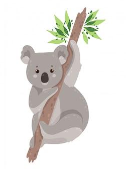 Śliczny koala niedźwiedź odizolowywający