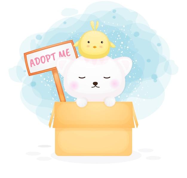Śliczny kotek w pudełku z tablicą ze znakiem adopcji