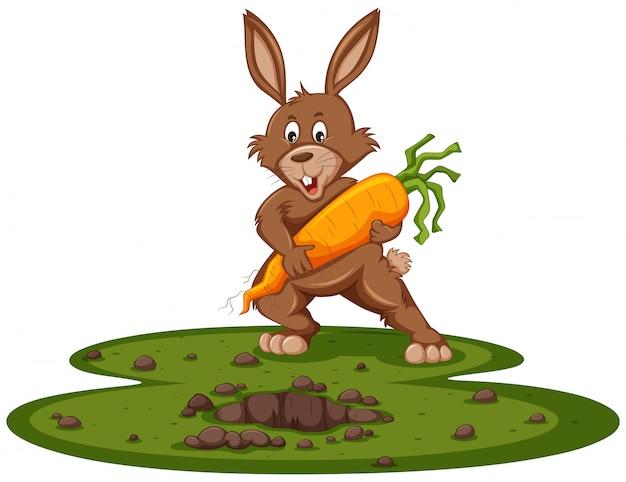 Śliczny królik i gigantyczna marchewka