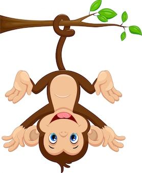 Śliczny małpi obwieszenie na drzewie