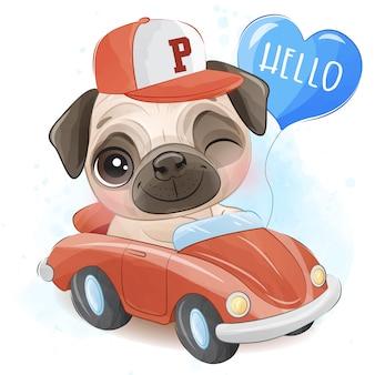 Śliczny mały mops jedzie samochód