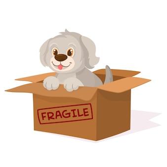 Śliczny pies w pudełku. przyjęcie nie kupuj.