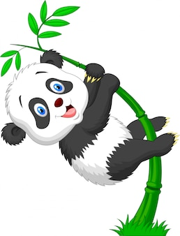 Śliczny śmieszny dziecko pandy obwieszenie na bambusie