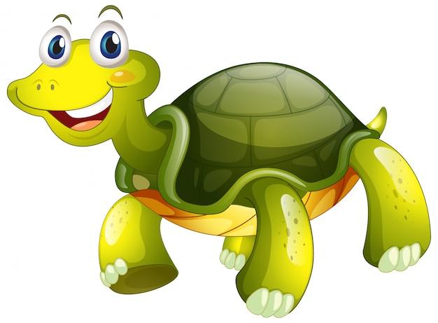 Śliczny żółw na bielu