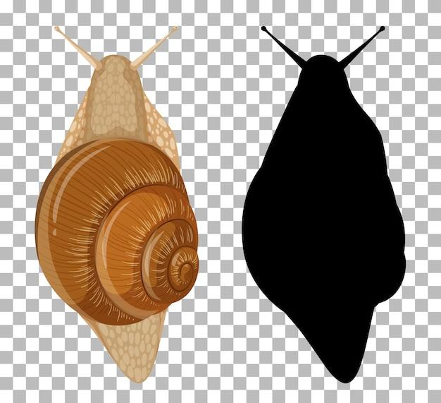 Ślimak z sylwetką na przezroczystym tle