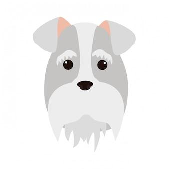 Słodka twarz psa