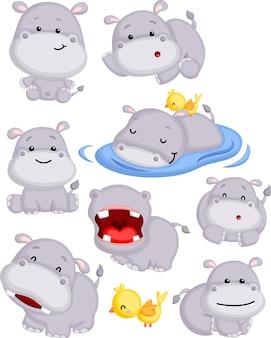 Słodki hipopotam w pozach