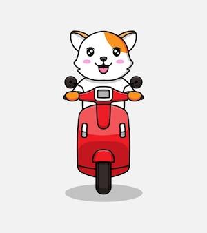 Słodki kot jedzie na skuterze