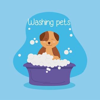 Słodki pies kąpiący się w fioletowej wannie