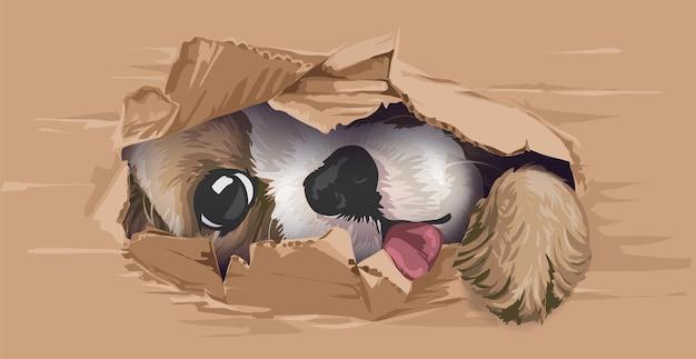 Słodki pies zaglądający przez kartonową dziurę