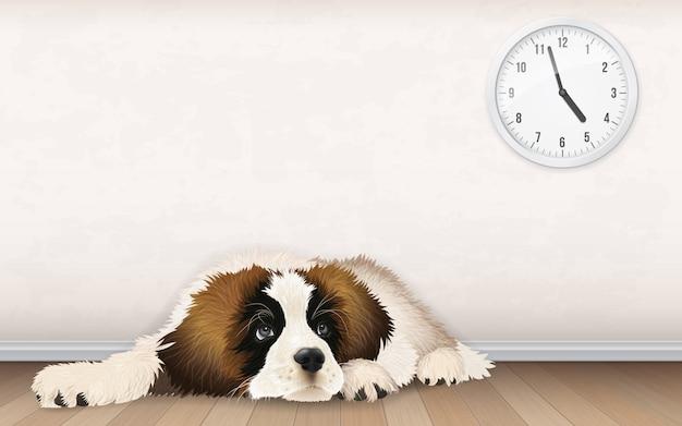 Słodki puszysty szczeniaczek czeka na powrót właściciela z pracy. znudzony pies leży na drewnianej podłodze.