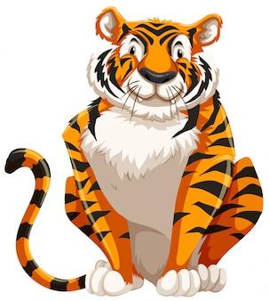 Słodki tygrys