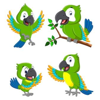 Słodkie ara kreskówek