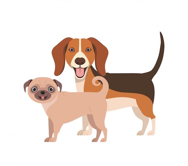 Słodkie i urocze psy na białym tle