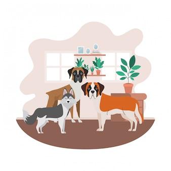 Słodkie i urocze psy w salonie