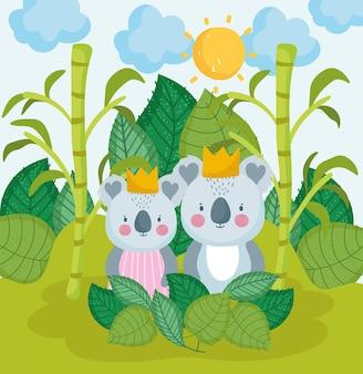 Słodkie koale w dżungli