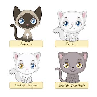 Słodkie kolekcja kotów