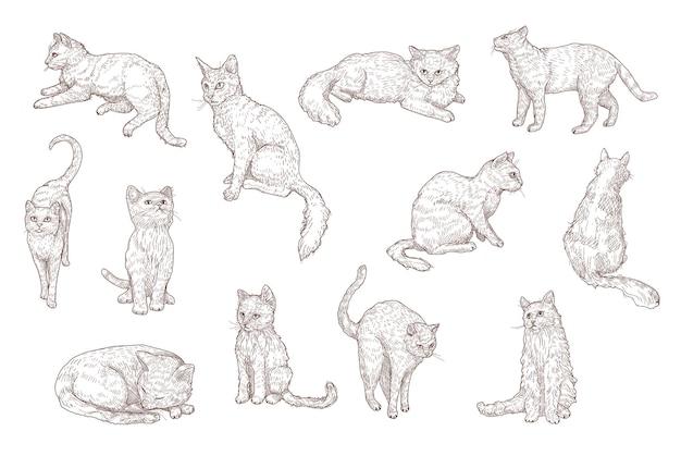 Słodkie koty i śmieszne kocięta ręcznie rysowane zestaw ilustracji