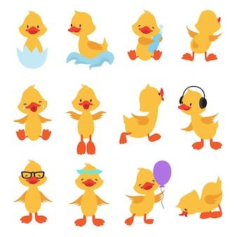 Słodkie pisklęta kreskówka żółte kaczki. dziecko kaczka wektor zestaw