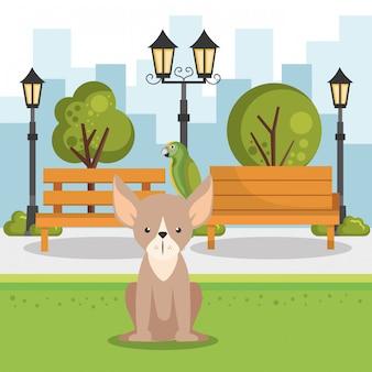 Słodkie psy na scenie parku