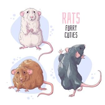 Słodkie ręcznie rysowane szczury