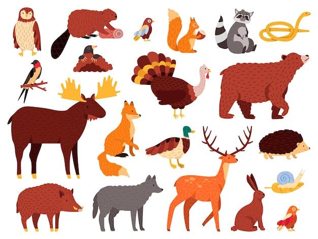Słodkie zwierzaki. kreskówka leśne zwierzęta, niedźwiedź szop lis i urocza sowa, ręcznie rysowane ssaki i ptaki, zestaw ikon ilustracji jesiennej fauny drzewnej. niedźwiedź i sowa, dziki lis i królik