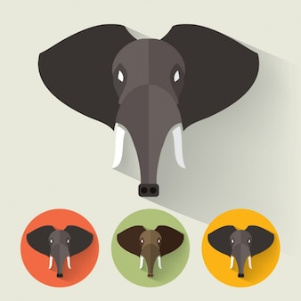 Słoń projektuje kolekcję
