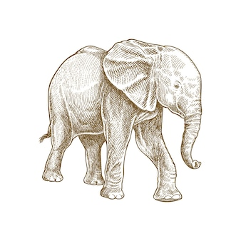 Słoń szczegółowe ręcznie rysowane