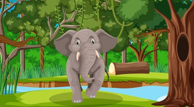 Słoń w lesie lub w lesie deszczowym z wieloma drzewami