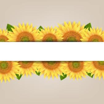 Słonecznik granicy z papierem