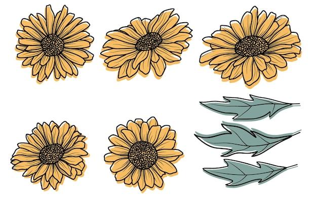 Słonecznik ręcznie rysowane wektor zbiory