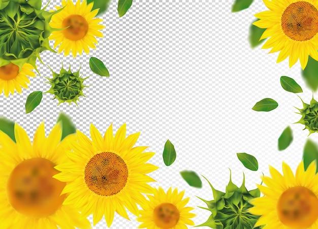 Słonecznik z zielonym liściem. piękna przestrzeń słonecznika.