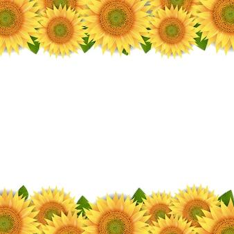 Słoneczniki granicy na białym tle