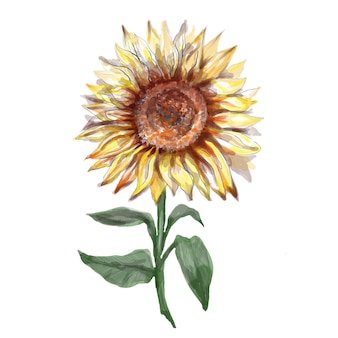 Słoneczniki ręcznie malowane akwarela ilustracja