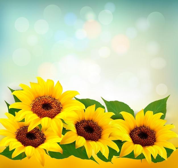Słoneczniki tło z słonecznikiem i liśćmi. wektor.