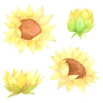 Słonecznikowe elementy ręcznie malowane akwarelą kolekcja dla projektu